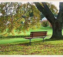 The Bench on the Boulevard by moonwillow