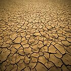 Consequences of a extended drought by David Osuna