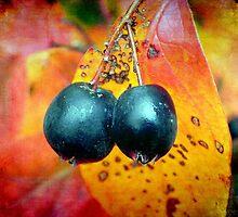 Fall Berries © by Dawn M. Becker