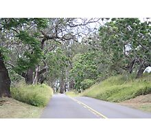 Upcountry Road Photographic Print