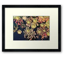 Autumn Mosaics Framed Print