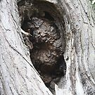 TREE HOLE by Katie Grove-Velasquez