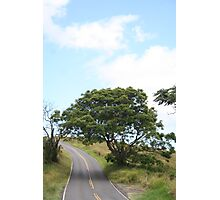 Winery Road Photographic Print