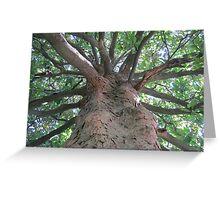 Bald Cypress Greeting Card