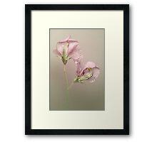 Pink Sweet Pea Flowers Framed Print