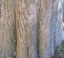 Bald Cypress 6 by dge357