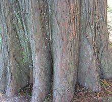 Bald Cypress 11 by dge357