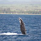 Humpback Whale Pec Fin by Katie Grove-Velasquez