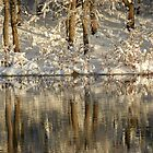 Winter Reflections  by Marijane  Moyer