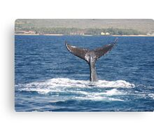 Extended Fluke Up Dive - Humpback Whale Canvas Print