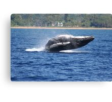 Humpback Breaching - 2 of 3 Canvas Print