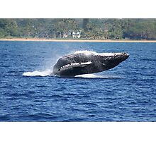 Humpback Breaching - 2 of 3 Photographic Print