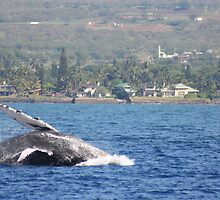 Humpback Breach 2 of 3 by Katie Grove-Velasquez