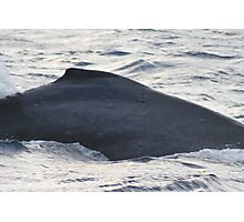 Dorsal Fin - Humpback Whale Photographic Print