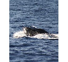 Humpback Tubercles Photographic Print