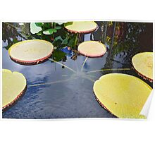 Giant Lily Pad Poster