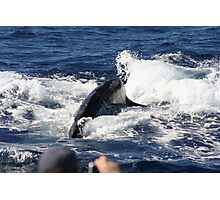 Friendly Humpback Whale Photographic Print