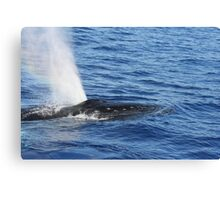 Humpback Whale Powerful Exhalation Canvas Print