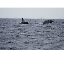 Humpback Twin Breach #2 of 4 Photographic Print