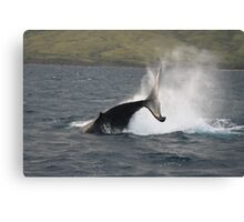 Humpback Whale Peduncle Throw Canvas Print