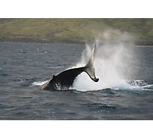 Humpback Whale Peduncle Throw Photographic Print