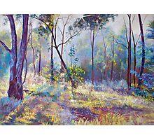 Symphony of Bush Colours Photographic Print
