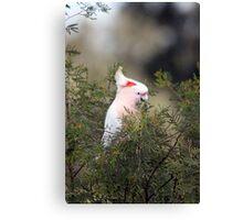 Pink Cockatoo Canvas Print