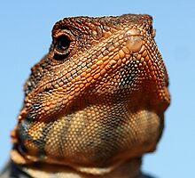 Tawny Crevice Dragon -Portrait by EnviroKey