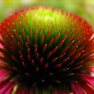 The Heart of a Flower II by Shienna
