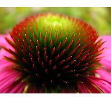 The Heart of a Flower II Photographic Print