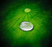Little Big Droplet by Mel Sinclair