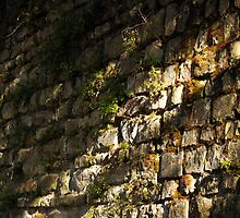 The Stone Wall by Rae Tucker