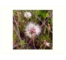 Dandelion in the Spring Art Print