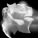 Dewy White by Mistyarts