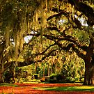 Old Southern Plantation Oaks by Kathy Baccari