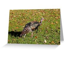 Tom T. Turkey Greeting Card
