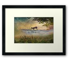 White Tail Deer Touting the Water - Parc National Mont Tremblant Framed Print