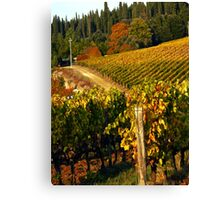 Tuscan Vineyard Canvas Print