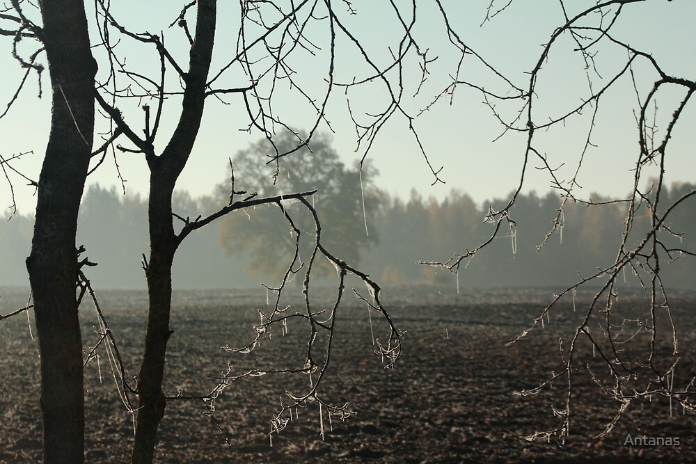 First frost on tree branches by Antanas