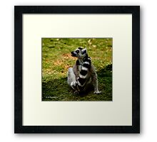 Heads or tails . Framed Print