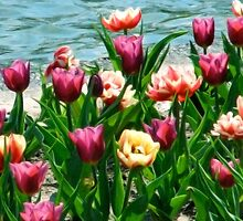 Painted Tulips (iPhone/iPod Case) by April Koehler