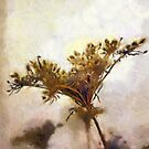 Dried flower art by buttonpresser