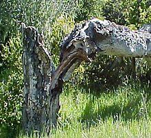 Split Tree... by Photos55