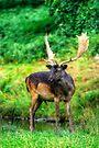 Fallow Deer 4.0 by Yhun Suarez