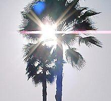 Sun Palm... by Photos55