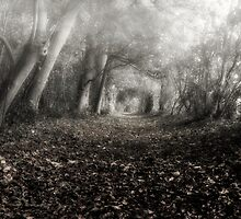 Autumn Woods  by cameraimagery