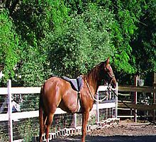 My Horse, Cashmare... by Photos55