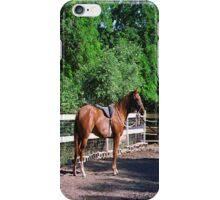 My Horse, Cashmare... iPhone Case/Skin