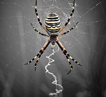 Golden Banded Garden Spider by V-Light