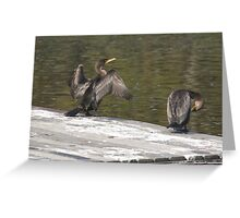 Double-Crested Cormorants Greeting Card
